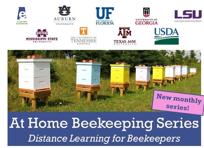 At Home Beekeeping Series Flyer image.