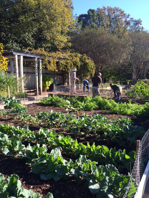 The vegetable garden at BBG