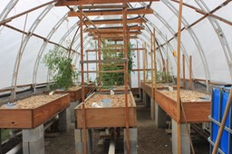 The Aquaponics room