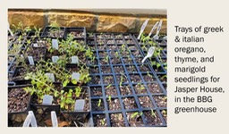 Plants being grown for Jasper House