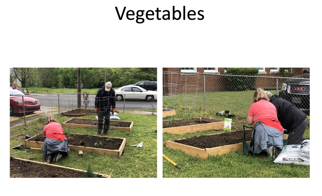 Vegetables being planted